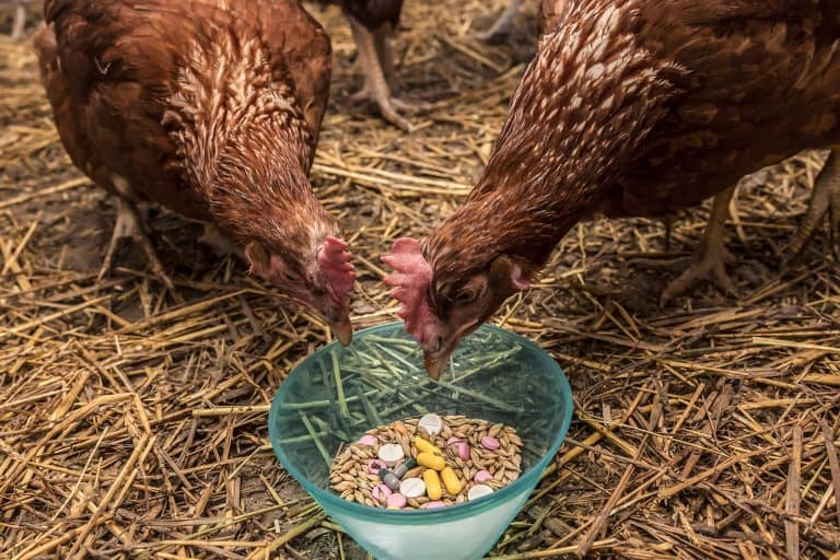Chicken Feed Mixed with Medicine