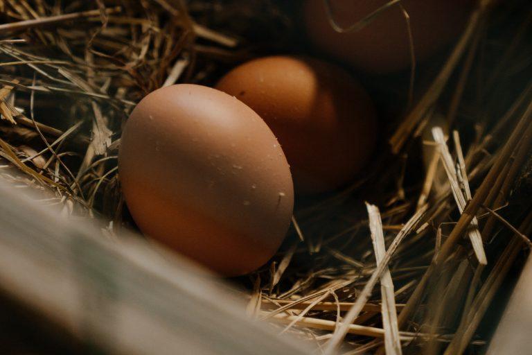 Chicken Nesting Box Close Up