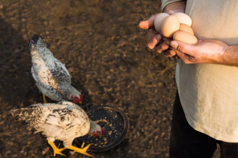 Farmer Holding Organic Eggs