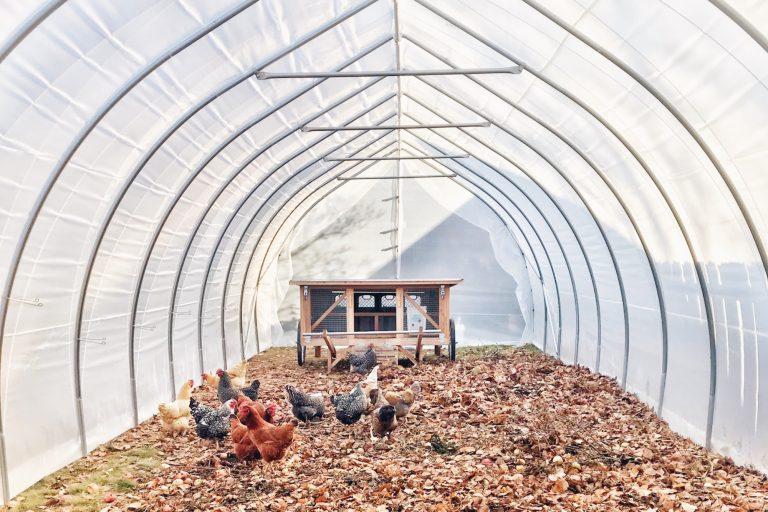 Greenhouse Chicken Run